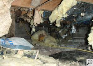 A messy crawl space filled with rotting insulation and debris in Montrose.