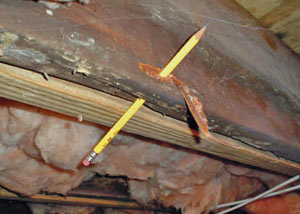 Destroyed crawl space structural wood in Donnellson